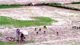 Prolonged hot spell threatens crops