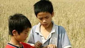 Mekong Delta in despair as rodents ravage rice paddies
