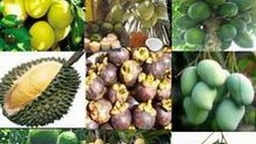 First fruit festival to promote trademarking of VN produce