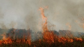 Fire continues spreading through Dong Thap national park