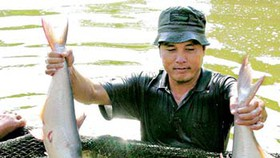Delta seafood output drops due to capital shortage