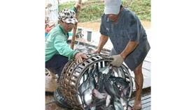Vietnam, WWF sign deal to promote tra fish