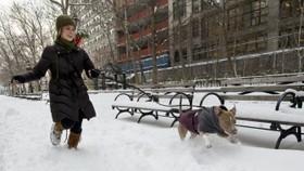 Flights canceled after fresh New York blizzard
