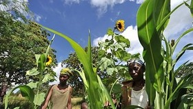 Gender equality on farms could cut hungry by 100 mln: UN