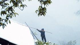 Unseasonal snowfall in northern Vietnam