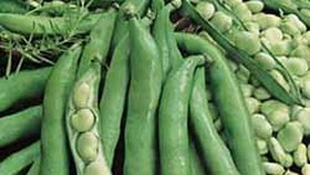 Radiation found on fava beans from Japan: Taiwan
