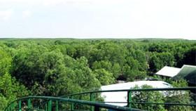 Fresh nature in Vàm Sát mangrove forest