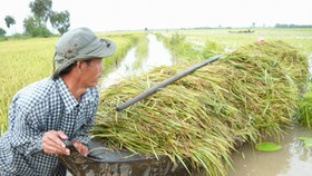 Rice crops in Mekong threatened by floodwaters