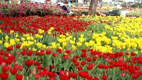 Int'l bonsai and flower show starts in Da Lat