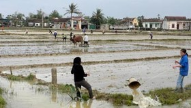 Vegetable, rice crops suffer extensive damage in central region
