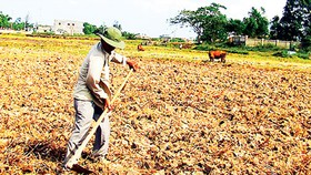 Drought hampering rice cultivation in central region