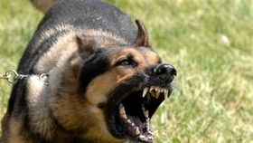 Rabies outbreak in northern mountainous provinces
