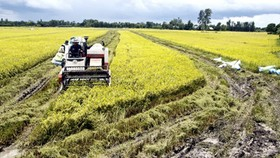 VFA optimistic of higher rice exports this year