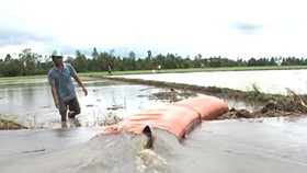 Hectares of rice fields in Mekong Delta under floodwaters