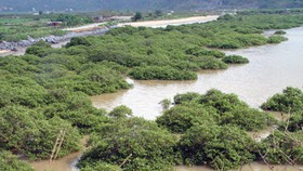 Plan to propagate mangrove forests along northern coastline