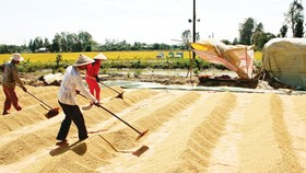 Demand for summer-autumn rice crop in jeopardy