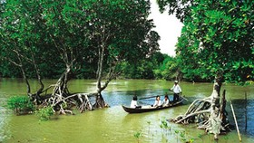 Int'l aid to restore mangrove forests in Ca Mau Province
