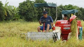 Gov't to assist with marketing of summer-autumn rice crop