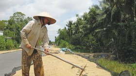 Low demand for summer-autumn rice in Mekong Delta