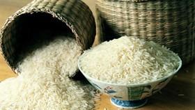 Trung Quốc điều tra vụ gạo nhiễm chất gây ung thư