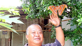 Rare butterfly on Red List found in Soc Trang Province