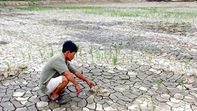 Drought leads to abandoned paddy fields in Central, Highland Provinces