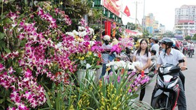 City enjoys bustling Tet