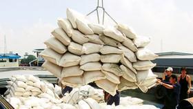 Vietnam rice export runs behind animal feed import