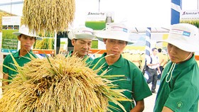 Agricultural production brings high income
