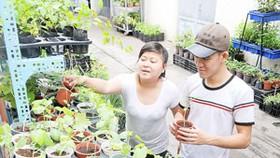 Hấp dẫn thị trường giống nông nghiệp