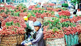 US to import Vietnamese litchi, longan