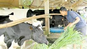 Gov't agricultural development loans cover more enterprises