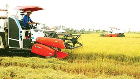 Agricultural production should base on market demand