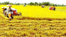 Mekong Delta lures FDI waves in agriculture