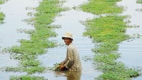 Farmers reap modern farming gains