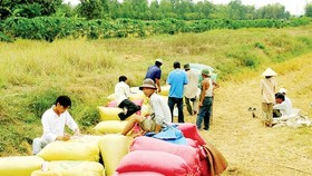 Gov't purchasing rice price not benefit farmers