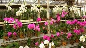 Over 4,000 exhibits to be displayed at Spring Flower Festival 2015