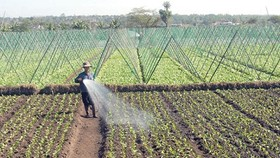 Large local firms to invest in green agricultural growth