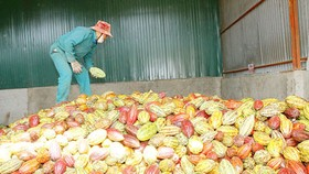 Agro, fishery, forestry export turnover slides