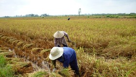 Embankment raises rice production levels