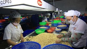 Vietnam exports 150,000 tons cashew nut in first half of 2015
