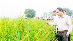 Vietnam finds new direction for rice industry