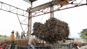 Mekong Delta's sugar plants in risk of material shortage