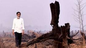 Indonesia cần 3 năm để giải quyết vấn đề khói bụi cháy rừng