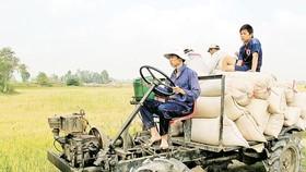 Export deceleration glooms Vietnamese rice market