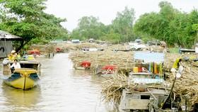 Mekong Delta sugarcane growers enjoy bumper crop, high prices