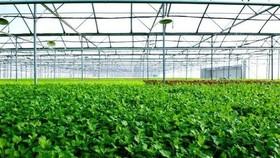 First farm in Vietnam receives US, EU organic certification