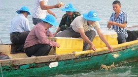 Blue crabs released in efforts to restore population off Phu Quoc