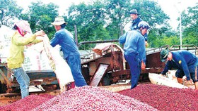 Agro-aqua-forestry export value reduces in November