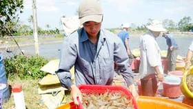 Agro fishery forestry exports far exceed five year plan